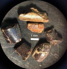 cretaceous crustaceans