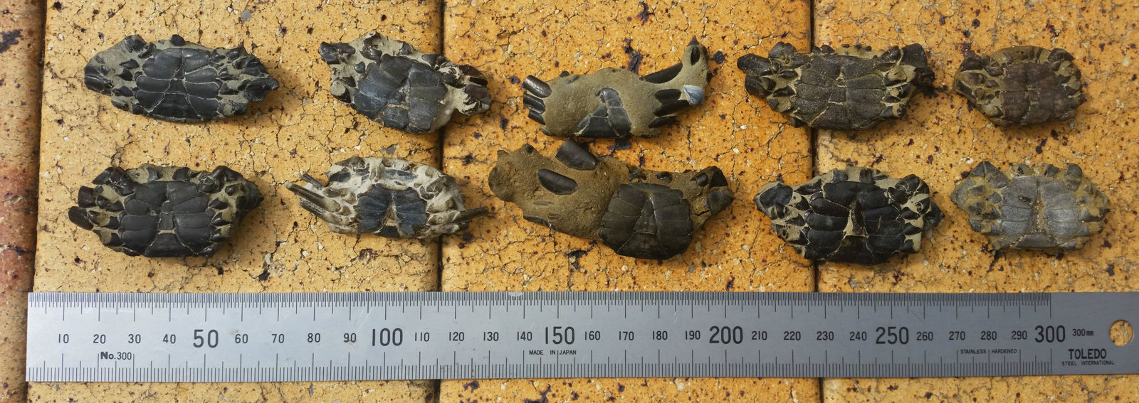 Crabs 3.jpg