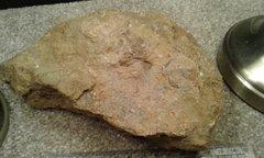 Matrix fossil plate.