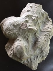 Ichnofossil Association