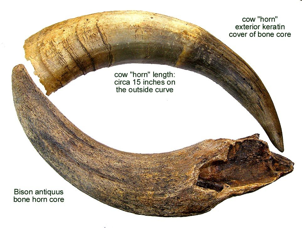 """Horn Core and """"Horn"""""""