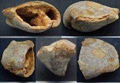Inside of a Terebratula (Glossothyris) Callovian Normandy France