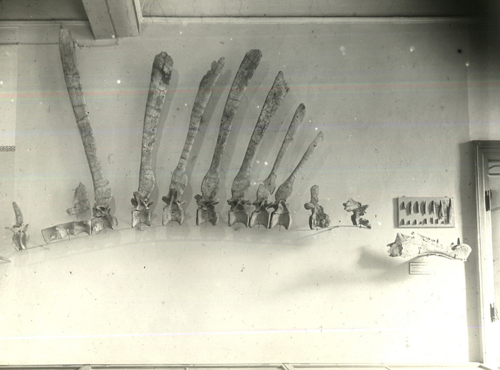 spinosaurus-discovery-slide-SU3A-jumbo.jpg.3799137e4c90c5961aa4441ed0c82e72.jpg