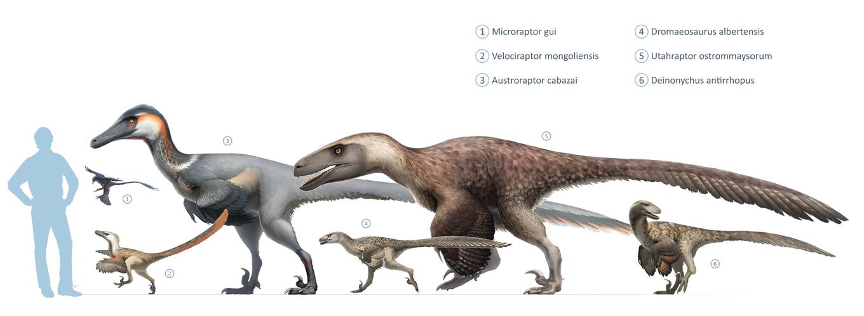 1920px-Dromaeosaurs.jpg