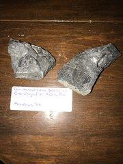 Odontocephalus cephalon and pygidium