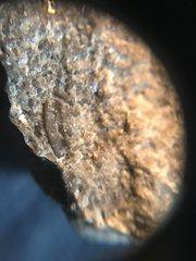 Lower Devonian Helderberg Group in Eastern NY