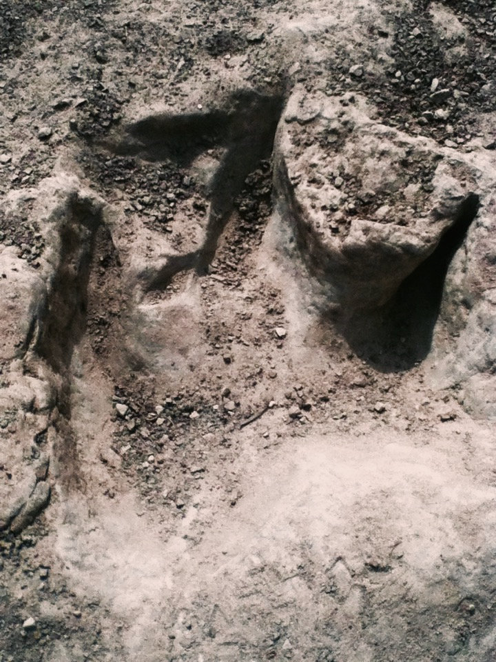 Glen Rose theropod track (1)