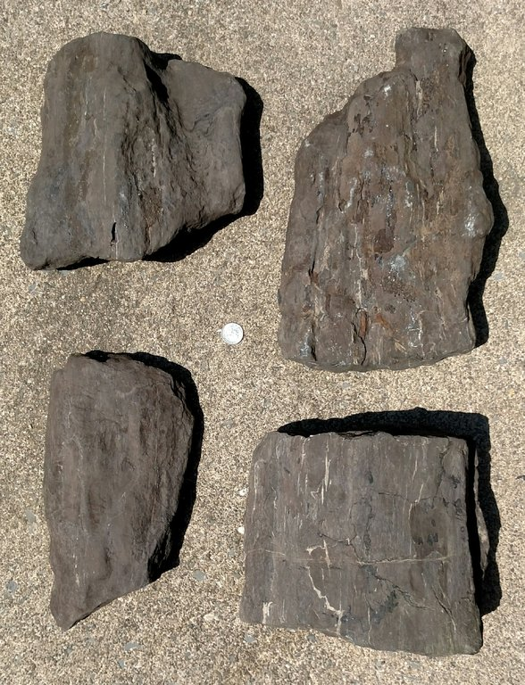 petrified wood 1 PA Triassic.jpg