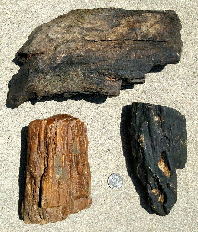 petrified wood 2 PA Triassic.jpg