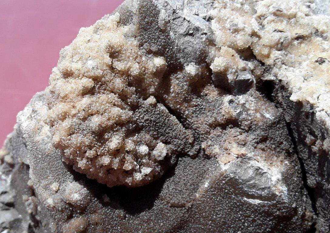 5f286e0a2c02d_Trachyscaphitesspinigerammonite3.thumb.jpg.7dabd704bb4d036400798f6ae1aaec9e.jpg