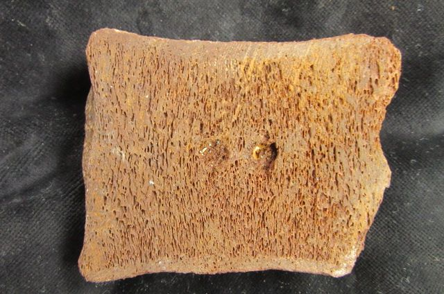 5f292c02ca349_pair-of-sectioned-reptile-vertebrae-faringdon-oxfordshire.-4-4320-p.jpg.6c17203b549b15851d3ef4ba7bb58304.jpg