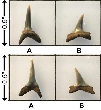 5f2b6895b71b7__Paleocene_Anomotodoncfnovus.jpg.a8b65c49b6ddb82881df0158037e2050.jpg
