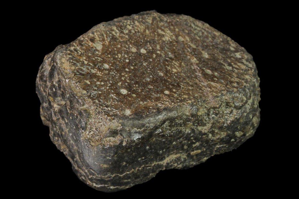 5f4a2273b9a1e_Ophthalmosaurussp.paddledigitOrtonPit03.thumb.jpg.a16a6e4ecf5f11f04194fb1ad1afd547.jpg