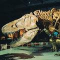 Josesaurus rex