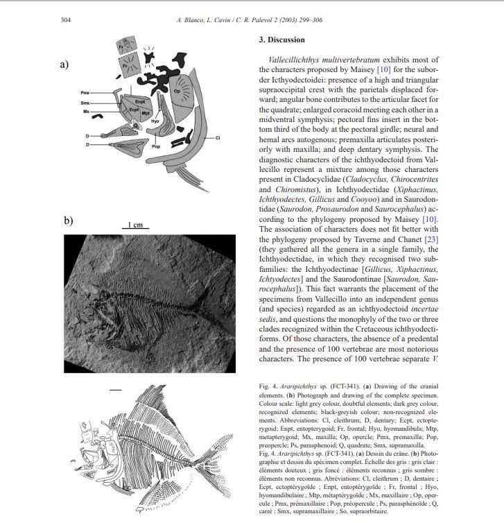 Araripichthys.JPG