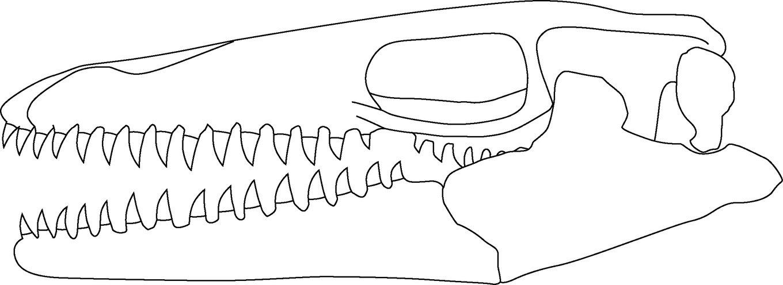 Prognathodon_kianda_skull_01.thumb.jpg.f45af1e85f3ea27d90bd0eddf57c3418.jpg