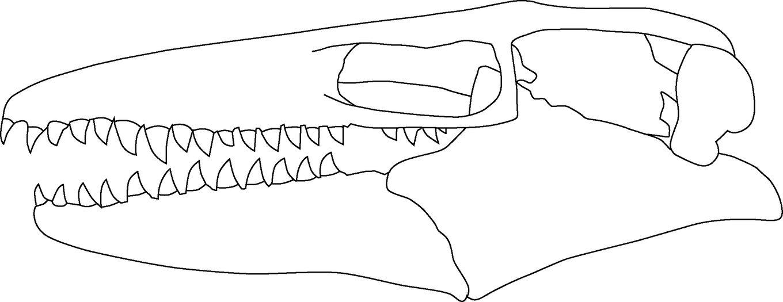 Prognathodon_sp_skull_01.thumb.jpg.a29cf4bfcb95293de29b25d6966e2f1c.jpg