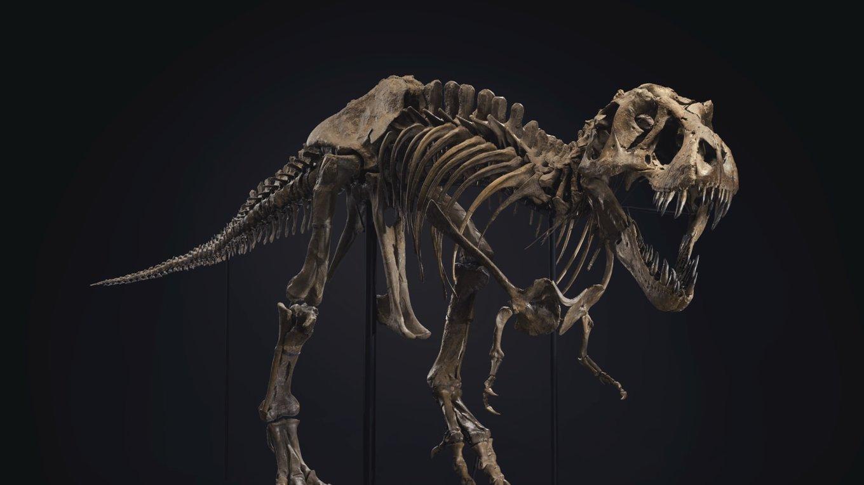 http___cdn_cnn.com_cnnnext_dam_assets_200916054801-restricted-01-stan-t-rex-auction-scli-intl.thumb.jpg.54e017892d7a35ef633dad8d3ffa7606.jpg