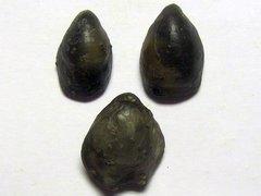Aromasithyris subcanaliculata & Cererithyris fleischeri