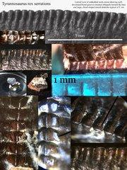 Tyrannosaurus rex serrations collage