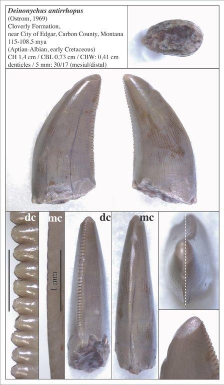 5f811249e31a3_05_Deinonychus.thumb.jpg.0c735760755b12d9cc097beeaecdaef1.jpg