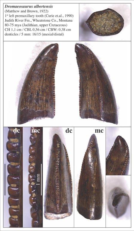 5f8112bb934ba_01_Dromaeosaurus_1stpremax.thumb.jpg.58c4edb16fcd13e6571bfbfb8b25a36f.jpg
