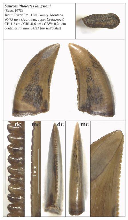 5f811891d05c6_09_Saurornitholestes.thumb.jpg.52900adbf427bfdf0f698a7640b50028.jpg