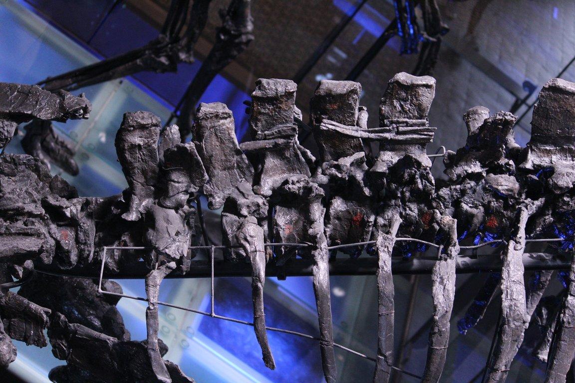 5f8977017d3ca_IguanodonsBrussels01.thumb.jpg.25b17c6bf3c49cdebf892957a571420c.jpg