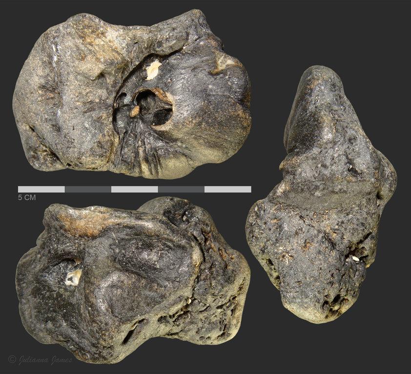 petrosal.thumb.jpg.d16aff5770e82ac83eea0f83573cf1cf.jpg