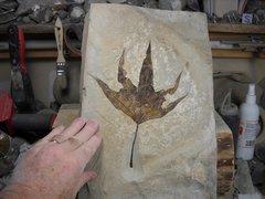 Fossil Plants