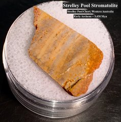 Strelley Pool Stromatolite