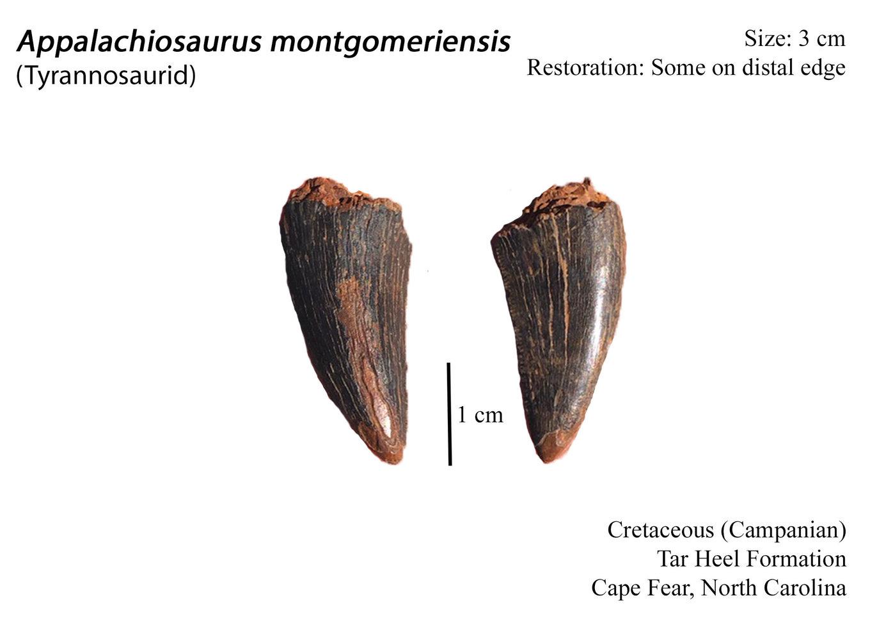 Appalachiosaurus.thumb.jpg.85022ea1660647e8f8139d045ca9a0c3.jpg