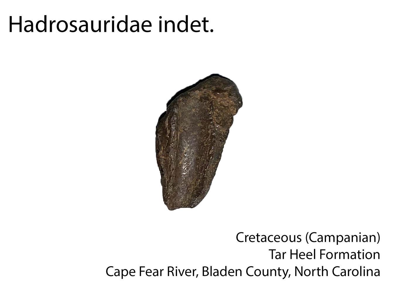 hadrosaur.thumb.jpg.3a5b61e0ec4c2a6db3d52c556c150680.jpg