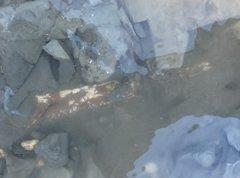 Baculites sp. (in-situ)
