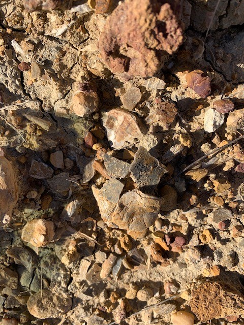 Fossil 12-22-20b.jpg