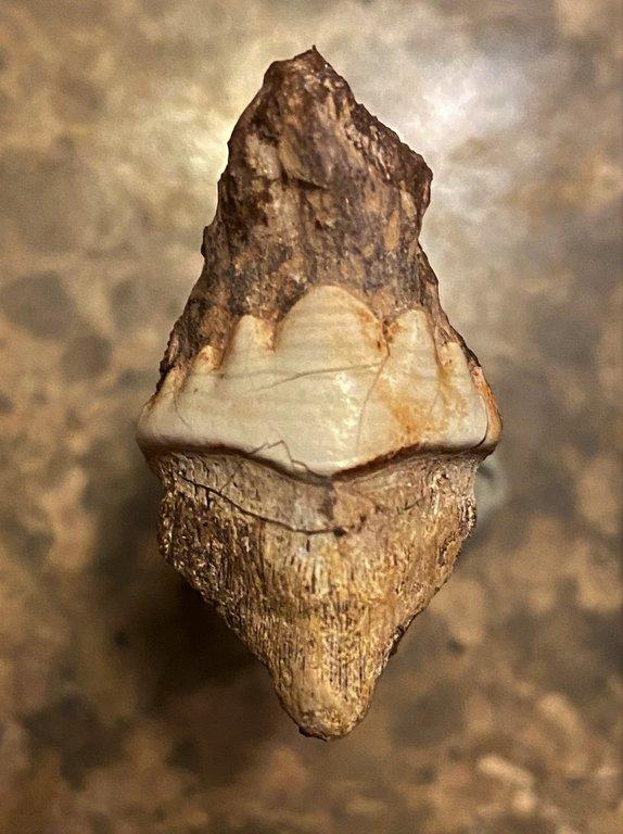 Fossil 4-22-20 IMG-1995.jpg