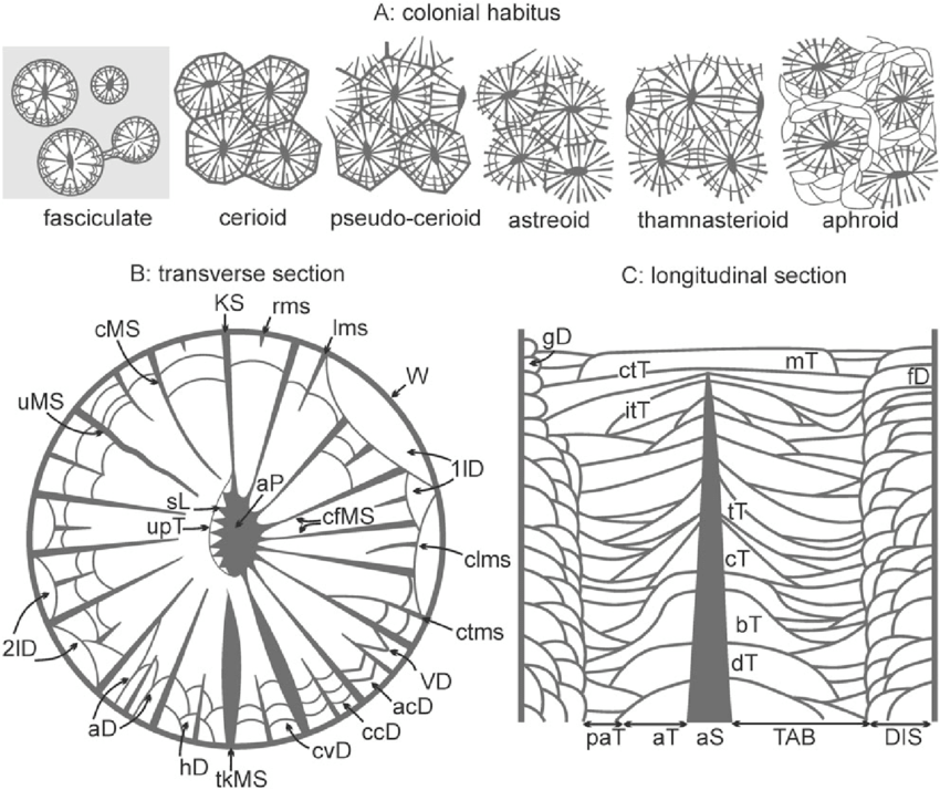5fefdf713bd26_Habits-and-morphological-characters-of-rugose-corals-referred-to-in-the-systematic(1).png.3119141c3db0417529d17b9fc7f0bb9c.png