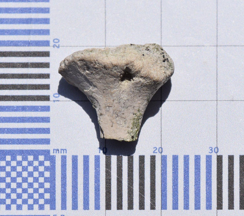 Unknown Reptile Bone