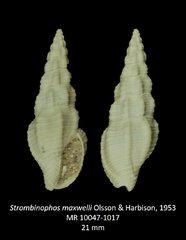 Stombinophos maxwelli