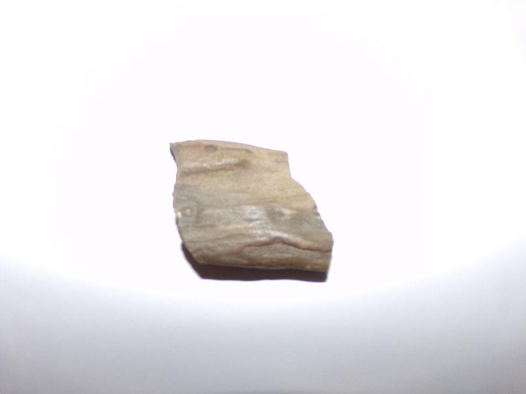 100_0881.JPG