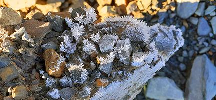 FrostIcicles.jpg.4c057ec6355a2e21156780e111ad3c8e.jpg