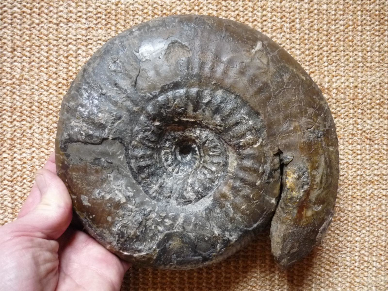 Middle Jurassic Ammonites from Southern Germany