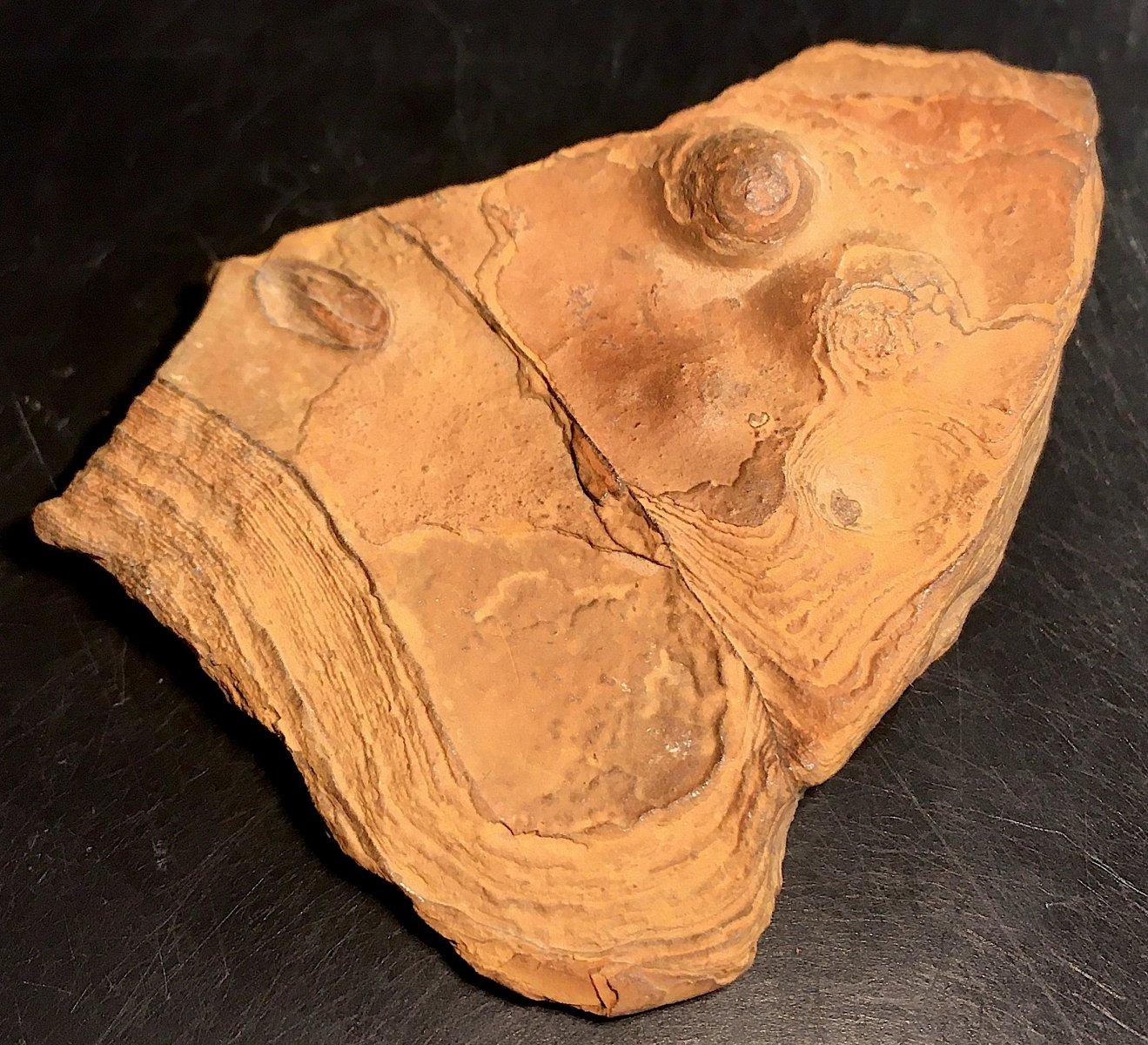 Texas Stromatolite