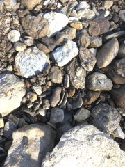 Can you find the shark tooth? (14)