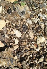 Can you find the shark tooth? (15)