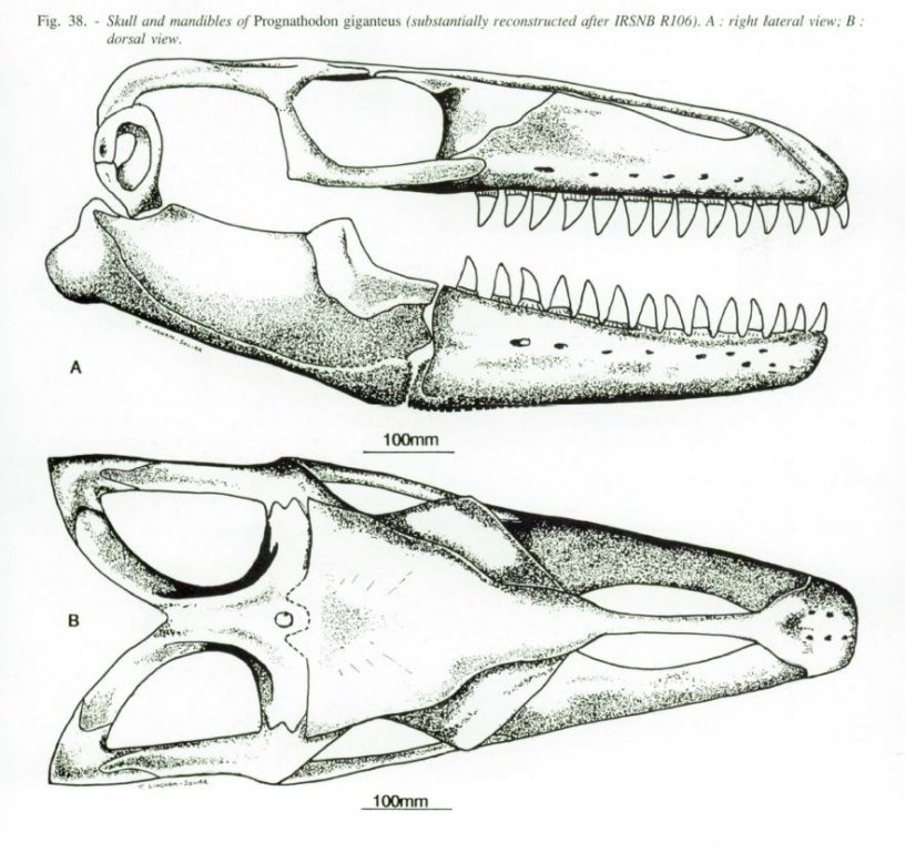 166465494_PrognathodongiganteusLingham-SoliarNolf.thumb.JPG.1376c17cf6713ad0eec6a37cfa156bc3.JPG