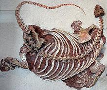 220px-Cotylorhynchus_romeri.jpg