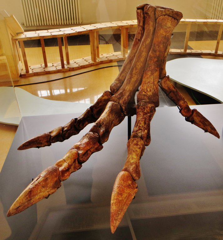 Spinosaurus_foot_restoration.thumb.jpg.c9037da7aeb7d25db56a395e76ebc0fb.jpg