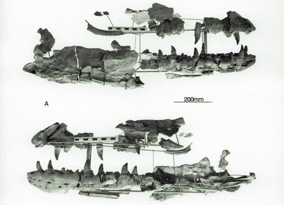 holotype.JPG.a7c4c998eda8ddf55410cb490fe73368.JPG