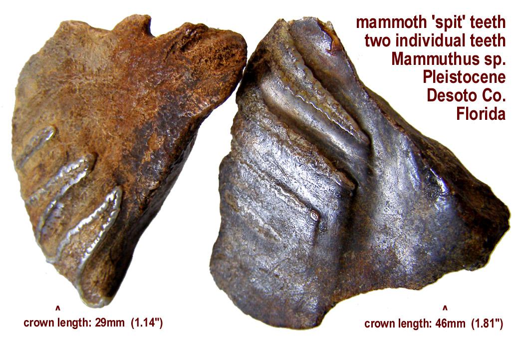 mammoth_spit_smallA.JPG
